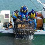 ホッキ桁曳き綱漁
